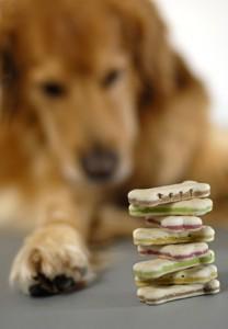 Bei der Hundeernährung gilt es die verschiedenen Fütterungsphasen zu beachten.