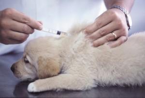 Tierarztbesuche sind nötig, um die Hundegesundheit zu erhalten.