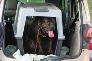 Die Hundebox ist beim Urlaub mit Hund unerlässlich