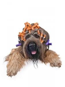 Gehört zur richtigen Fellpflege auch ein Besuch im Hundesalon?