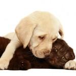 Wenn man einige wichtige Tipps beachten, steht dem friedlichem Zusammenleben von Hund und Katze nichts mehr im Weg.