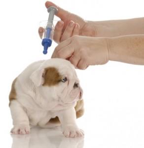 Urlaub mit Hunden - Welche Impfungen sind nötig?