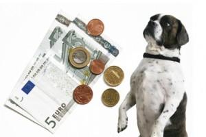 Das Hundesteuergesetz variiert je nach Bundesland.