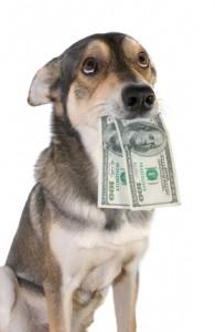 Welche Versicherung ist wirklich nötig? Ein Muss: die Hundehaftpflicht.