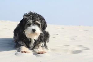 Was gilt es bei den Ferien mit Hunden zu beachten?