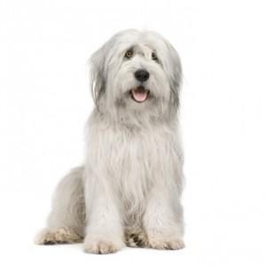 Ferien mit Hund - oder lieber ohne?