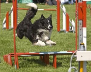 Agility Parcours - ein Geschicklichkeitstraining für den Hund