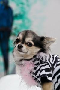 Hundemantel und Co. - ein niedliches Accesoire oder wirklich wichtig gegen Kälte und Nässe?