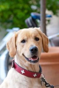 Hundehalsband und Hundeleine - wie treffe ich die richtige Wahl?