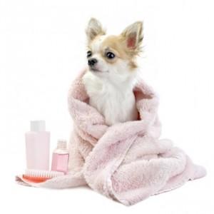 Fellpflege im Hundesalon - wirklich nötig oder der pure Luxus?
