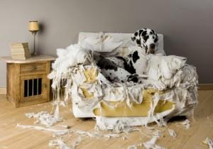 Hundeerziehung setzt nicht auf Bestrafung, sondern auf Verstehen des Hundes.